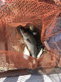 玉島の釣り