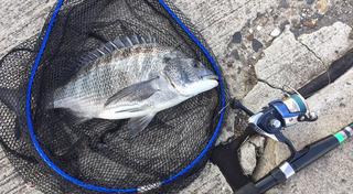 玉島チヌ釣り