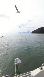 玉島遊漁船